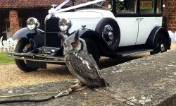 1928 Vintage 'Masons' British Built Citroen in White (with Owl)